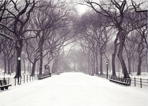 纽约的初雪(图)