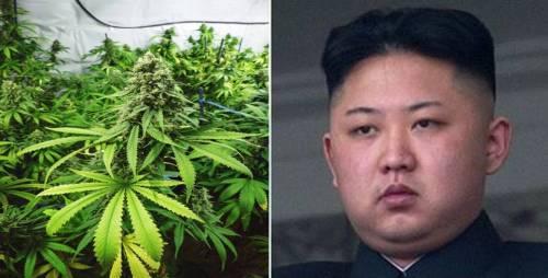 中国人跑到朝鲜去买一种东西 猜猜是什么?(图)