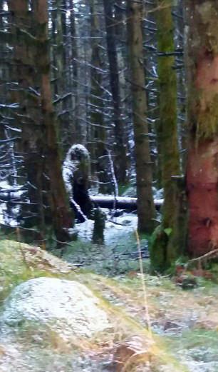 """北爱尔兰森林拍到""""大脚怪""""照片(图)"""