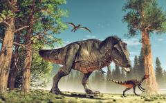 回顾历来5次大规模灭绝地球恐进入另一次大灭绝(图)