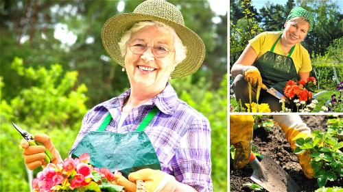 从事种菜养花等园艺工作,有助于活跃老人的大脑,避免老年痴呆症。