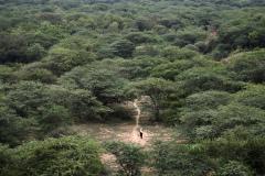 他为亡妻种下一片500万棵树的森林今终含笑而去(图)