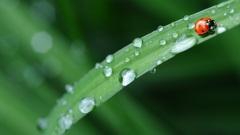 春雨绵绵它是春天最后一个节气(组图)