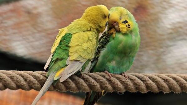 《大唐奇事》记载了一个人前世是鹦鹉的奇事。