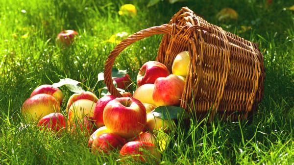 发烧时多补充维生素,吃苹果等水果有益健康。