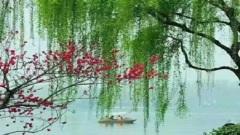 【天雪】武陵春?柳绿花明(图)