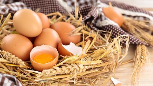 孩子从小适当吃鸡蛋,有益发展记忆力。
