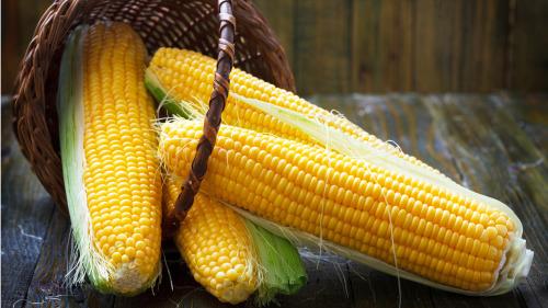 玉米胚中富含多种不饱和脂肪酸,具有健脑作用。