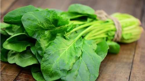 菠菜含丰富的维A、C、B1和B2是脑细胞代谢的最佳供给者之一。