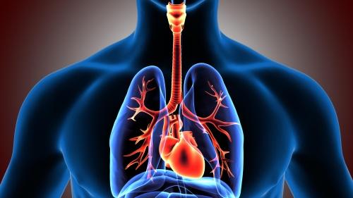 除肺火,也可用呼吸咳嗽洗肺法,幫助呼吸道排出分泌物,增強免疫力。