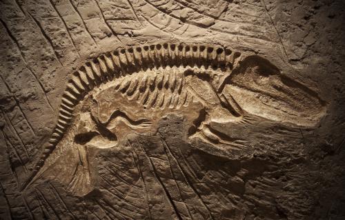 形状完整的恐龙化石。