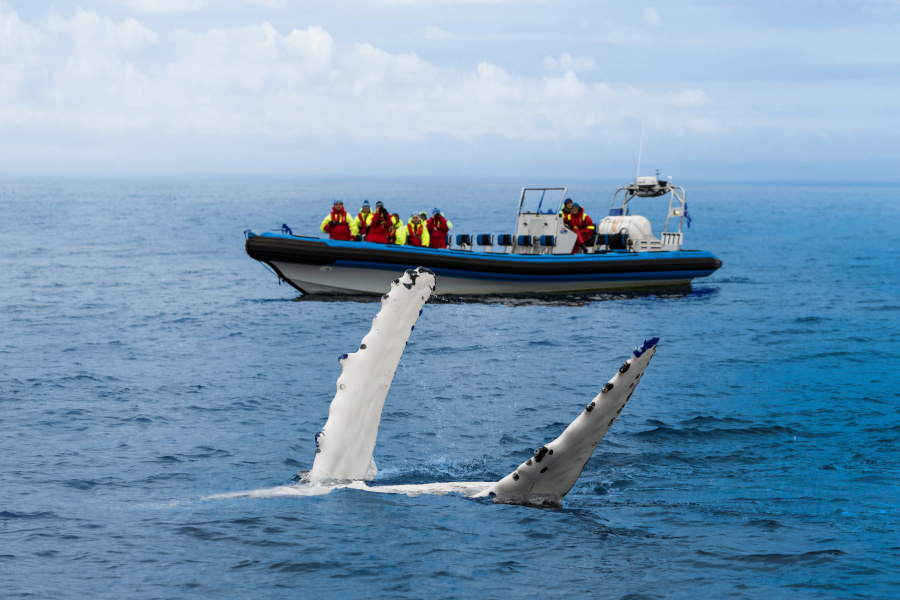 英国:不能摸鲸鱼。