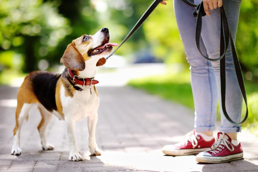 意大利:每天遛狗必须超过3次。