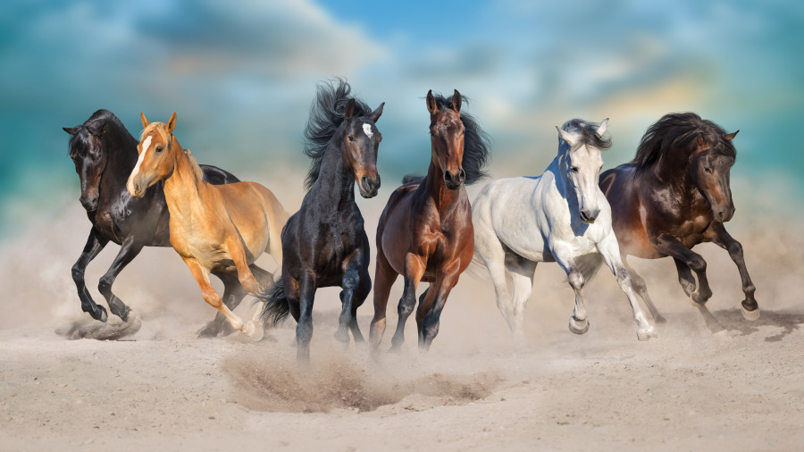 分槽喂马和同槽养猪。