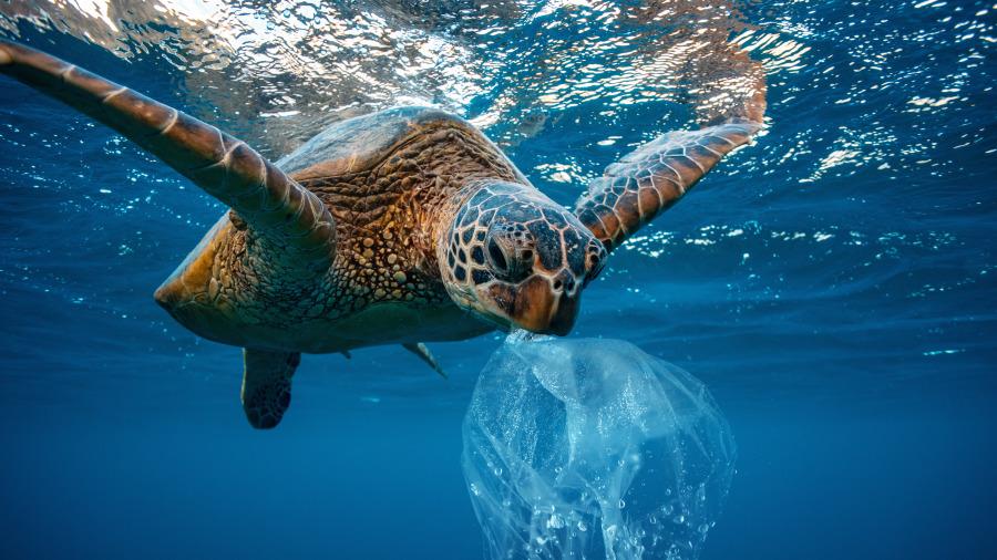 塑胶袋发明者之子说,爸爸的初衷是为了救地球。