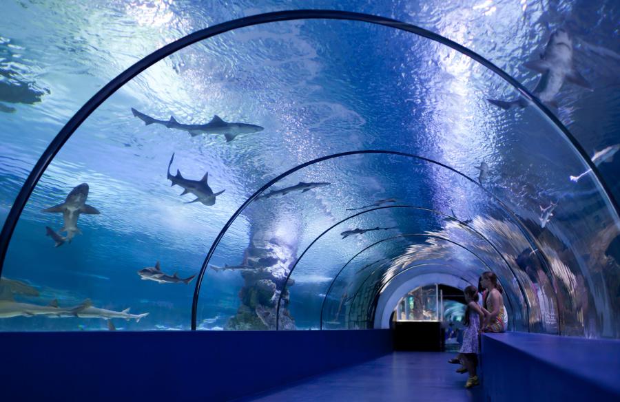 为什么大型水族馆里面鲨鱼的种类就只有那几种呢?