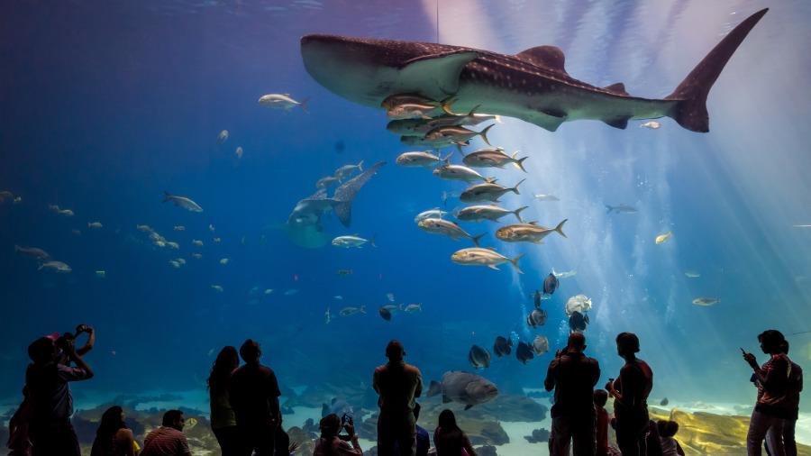 明明可吃到饱,为何水族馆的鲨鱼不吃其他鱼?