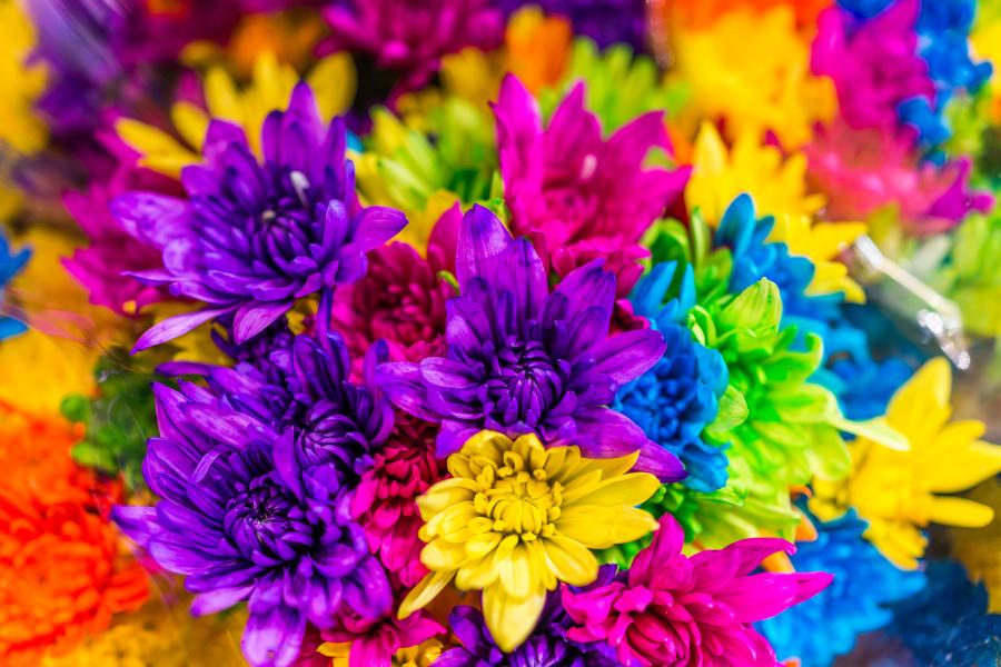 「四色視者」,她們和鳥類一樣,能夠辨識出的顏色比我們多幾百種!(