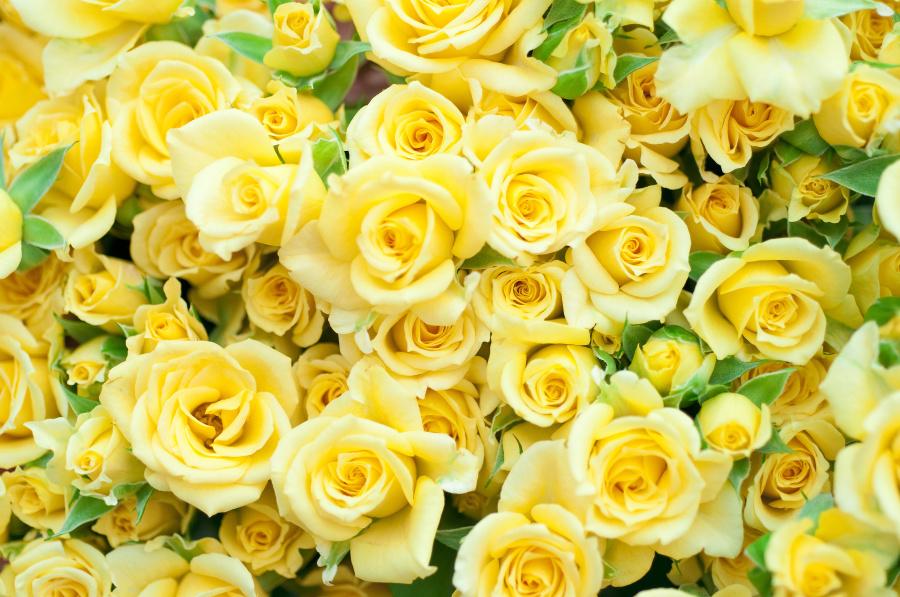 在墨西哥文化中黄玫瑰意味着死亡。
