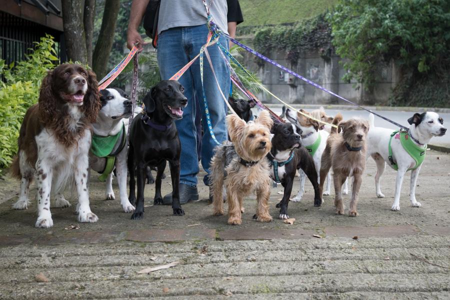 流浪犬本身并不是根据其是否有明确饲主来定义的,而是由其活动是否被限制或管领来定义。