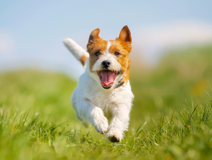 在德国养狗就像管理车子一般,是需要缴税的。