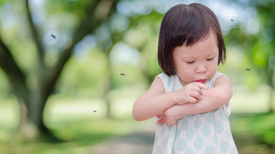 蚊子最高可以飛到幾層樓?生物學家給出答案。
