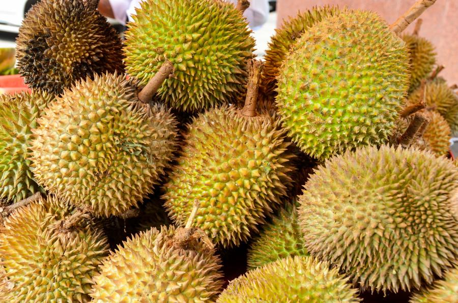 毫不誇張的說,中國前去吃榴槤的遊客帶動了泰國榴槤產業的飛速發展。