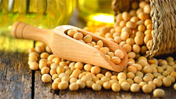 黃豆,營養非常全面,高熱量高蛋白,可以做成各種不同的食品。