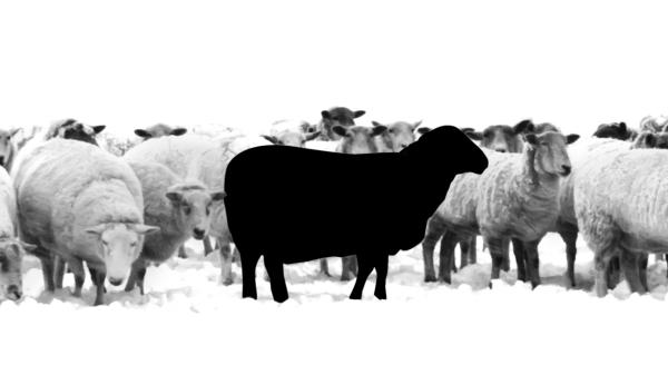 黑羊效应:缺爱的人最容易善良(组图)